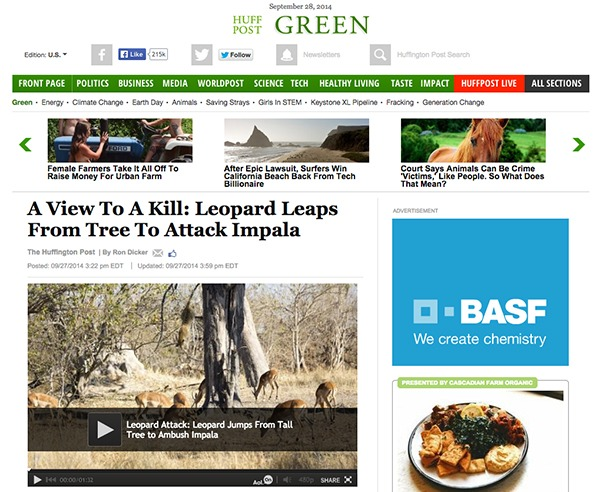 Huffington_Post_Green_Leopard_Feature_BLOG